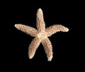 Starfish on a black background Royalty Free Stock Photo