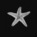 Starfish on black background closeup of Royalty Free Stock Photo