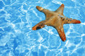 Starfish in Blue Water Stock Photo