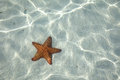 Starfish on the bottom of the caribbean sea Royalty Free Stock Images