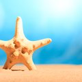 Starfish on the clean golden sand studio shot Royalty Free Stock Photos