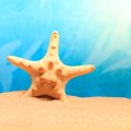 Starfish on the clean golden sand studio shot Stock Photos