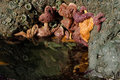 Starfish clinging to rock in tidal pool group of reflected the water of a oregon coastal Stock Image