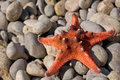 Starfish close-up Royalty Free Stock Photo