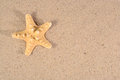 Starfish close-up in a sand Royalty Free Stock Photo