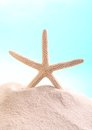 Starfish close up of on sand with copy space Royalty Free Stock Photos