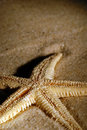 Starfish close up on sand, at night Royalty Free Stock Photo