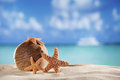Starfish and coconut with ocean beach and seascape shallow dof Stock Photos