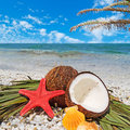 Starfish coconuts and palm under a tree Royalty Free Stock Image