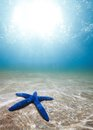 Starfish deep underwater Stock Photos
