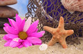 Starfish and Flower Stock Photography