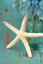 Starfish with flower Stock Photos