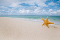 Starfish on golden sand beach with waves in  soft light Royalty Free Stock Photo