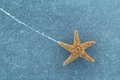 Starfish on ice the surface texture background Royalty Free Stock Photo