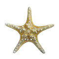 Starfish isolated. Royalty Free Stock Photo