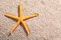 Starfish lying on golden beach sand in the summer sun with copyspace Stock Photos
