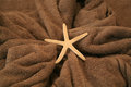 Starfish lying on a towel brown Stock Images