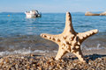 Starfish and motorboat on the beach blurred in the background Stock Photography