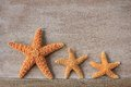 Starfish from the North Sea Royalty Free Stock Images