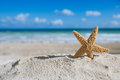 Starfish  with ocean , beach and seascape Stock Image