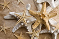 Starfish on Old Paper Royalty Free Stock Photography