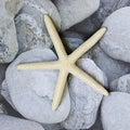 Starfish on pebble Royalty Free Stock Photo