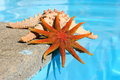 Starfish By Pool Stock Photos