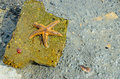 Starfish on the princes islands in marmara sea Royalty Free Stock Photo