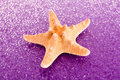 Starfish on purple background Stock Photography