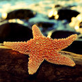 Starfish on a rock closeup of of beach Stock Image