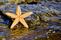 Starfish on the rock in the sea water Stock Image