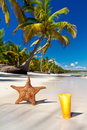 Starfish and sanblock tube on beach Royalty Free Stock Photo