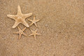 Starfish on sand close up background Stock Photo