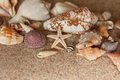 Starfish sand conch shells clam Royalty Free Stock Photo