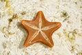Starfish on the sandbank zanzibar Royalty Free Stock Photo