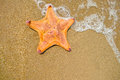 Starfish the on sandy beach Royalty Free Stock Image