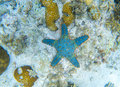 Starfish on sea bottom. Underwater landscape with star fish. Tropical fish in wild nature. Royalty Free Stock Photo