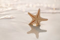 Starfish on sea ocean beach in florida soft gentle sunrise ligh light color Stock Photos