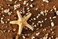 Starfish and sea shells on the exotic beach at warm sunset travel vacation holidays concepts Stock Images