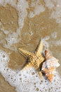 Starfish and Seashell Royalty Free Stock Photos
