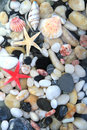 Starfish, seashell, and colorful pebble stones Royalty Free Stock Photo