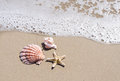 Starfish and seashell on the sandy beach two seashells Stock Photo