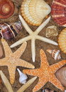 Starfish and Seashells Stock Image