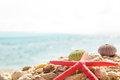 Starfish seashells beach summer background Royalty Free Stock Photo