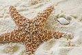 Starfish and shell on sandy beach Royalty Free Stock Photo