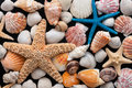 Starfish and shells on a black background Royalty Free Stock Images