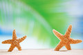 Starfish shells on the ocean beach and seascape shallow dof Stock Photo