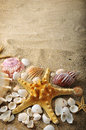 Starfish and shells on sand near sea in summer Royalty Free Stock Photo
