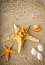 Starfish and shells on sand near sea in summer Royalty Free Stock Image