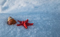 Starfish and snail shell in snow Royalty Free Stock Photo